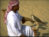 Falcon of Dubai